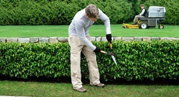 Jardinage Luxembourg • Homme à tout faire Luxembourg